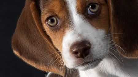 Эффективность некоторых методов лечения различных форм конъюнктивита у собак