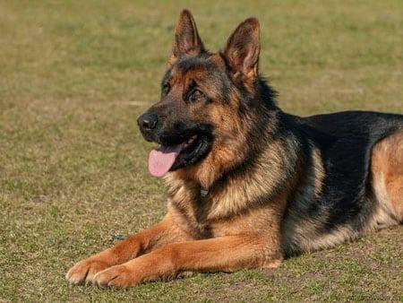 Мониторинг отита у собак