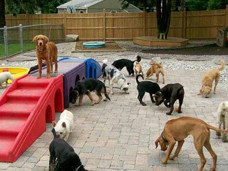 Площадка для собак наподобие детской площадки