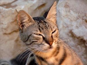 cats_014