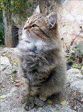 cats_018