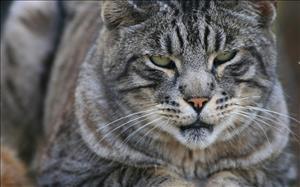 cats_027