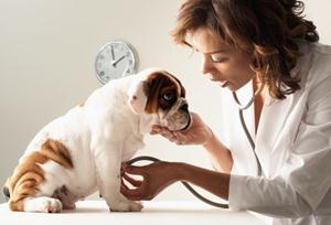 veterinar23