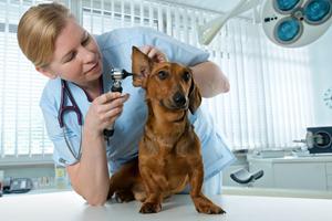 veterinar28