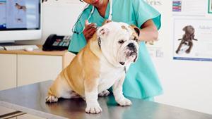 veterinar31