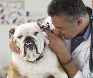 veterinar40