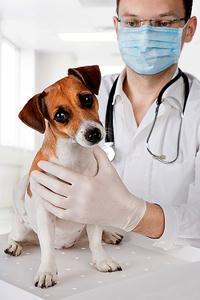 veterinar42