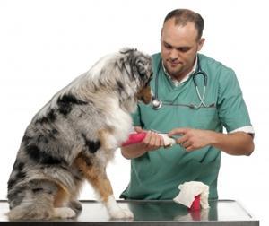 veterinar57