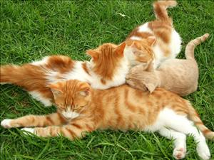 cats_029
