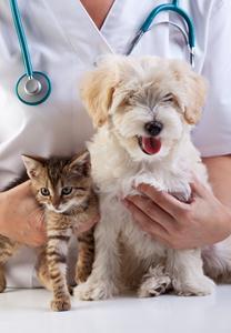 veterinar11
