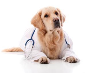 Иммуностимулирующий и регенерирующий ветеринарный препарат