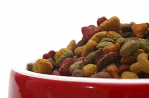 Close up on healthy dog food kibbles in a red dish.
