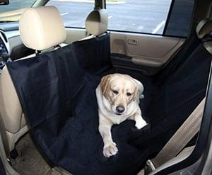 Топ 10 советов для безопасного путешествия на автомобиле с вашим питомцем