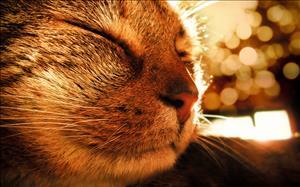 Странные кошки и их рекорды