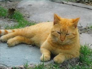 Как приучить кошку к новой пище