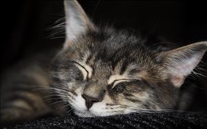 cats_035