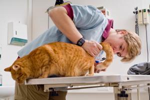 Системно структурный анализ сущности ветеринарных услуг и особенности их предоставления