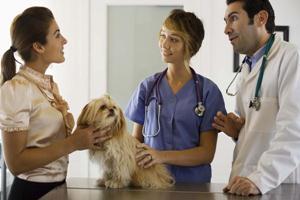 Эпизоотологических проявления демодекоза собак