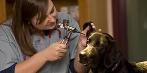 veterinar01