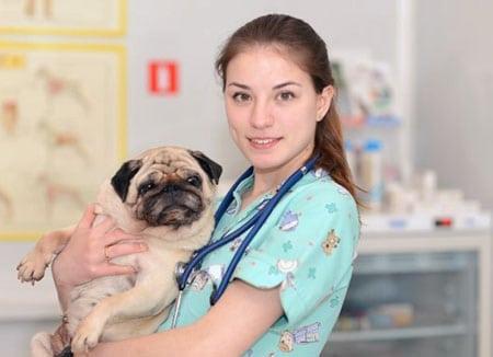 Анализ функциональной структуры деятельности специалиста по ветеринарной медицине