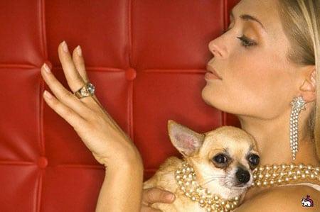 Маркетинговые исследования потребительских предпочтений бижутерии для животных