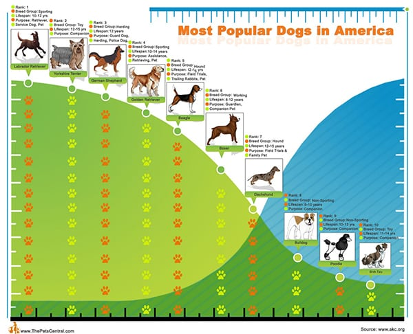 Самые популярные Собаки в США: ранжирование по городам
