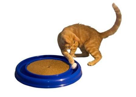 World's Best Cat Toy мечта кошки