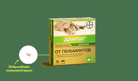 Гельминтоз у кошек. Как распознать и чем лечить