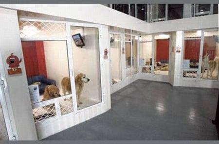 Бизнес идеи: Организация гостиницы для собак