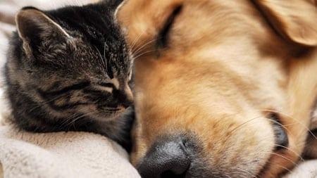 Уход за домашними животными