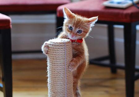 Как заслужить доверие котенка