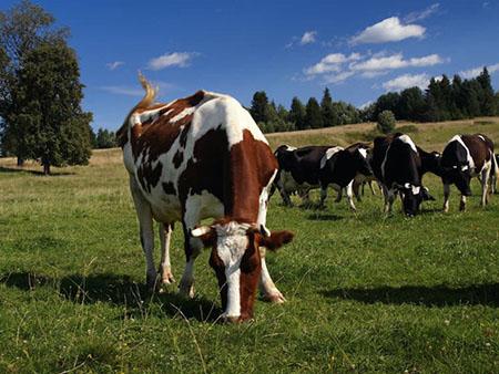Радио-метки скота для животноводства