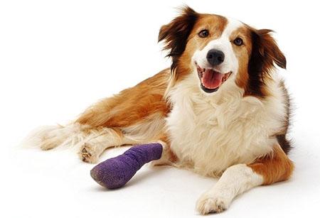 Анестезиологическое обеспечение лечения переломов костей собак