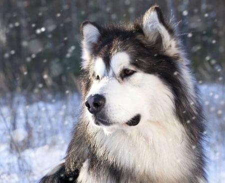 Лечение, профилактика и анализ эпизоотической ситуации по лептоспирозу собак