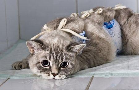 Ингаляционный наркоз кошки