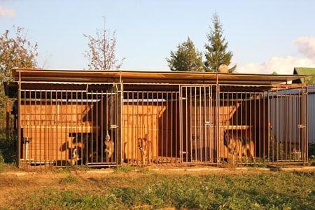 Как открыть зоогостиницу