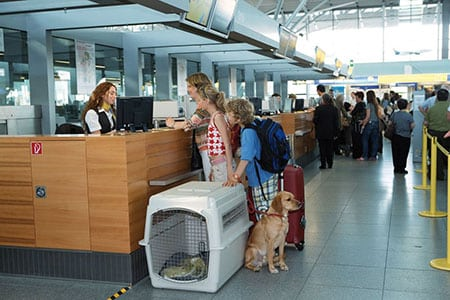 Сервис международной перевозки домашних животных