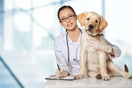 Veterinarian. Vet using technology with a little dog - isolated