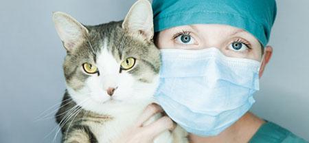 Этические аспекты ветеринарного маркетинга