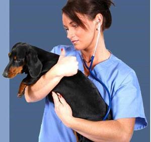 veterinar63