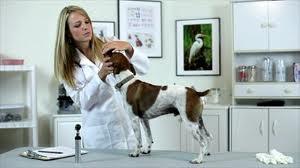 Профилактический уход за полостью рта животных