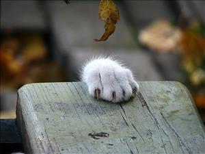 Диагностика гастроэнтерита у домашних кошек