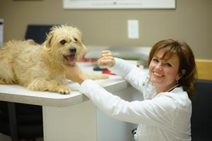 Продукты для стоматологического самообслуживания собак и кошек