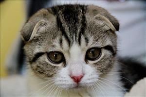 Бронхиальная астма у домашних кошек: патогенез, диагностика и лечение