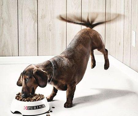 creative-ads-part-i-bad-dog (2)