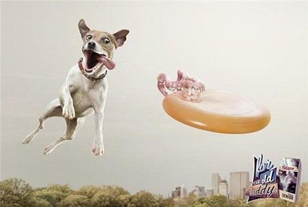 creative-ads-part-i-bad-dog (5)