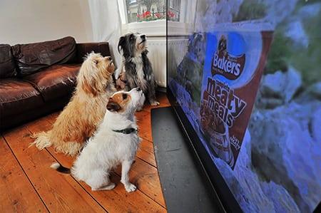 Тенденции развития телевизионной рекламы в зообизнесе