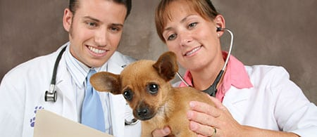 cropped-veterinary2