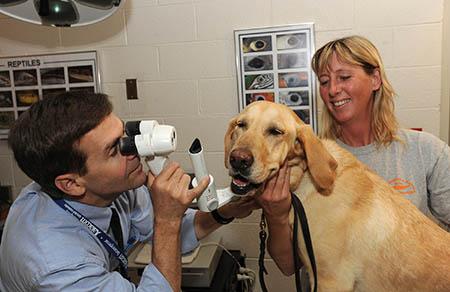 na-prieme-u-vetvracha-oftalmologa