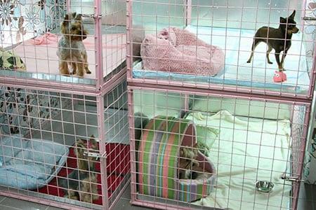 Гостиница для животных отель для животных